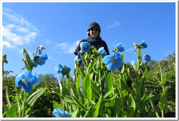 Himalyan Poppies and Me