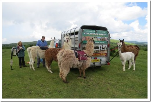 Llama Start at Trek