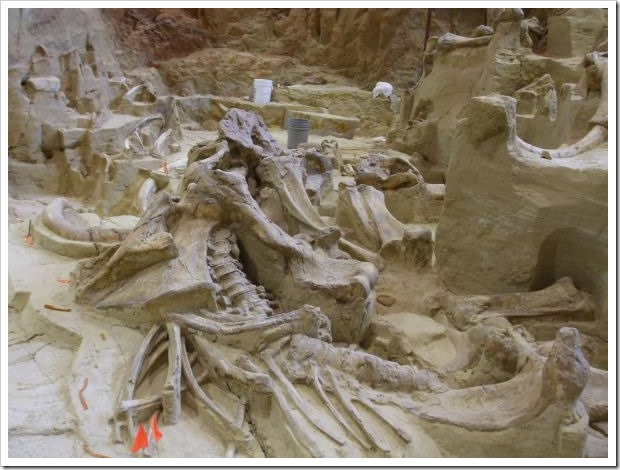 Mammoth_skeleton 2